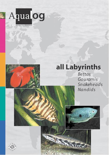 Aqualog All Labyrinths