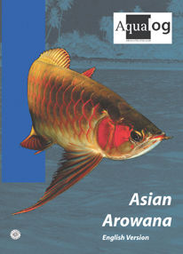 Aqualog Asian Arowana English Version