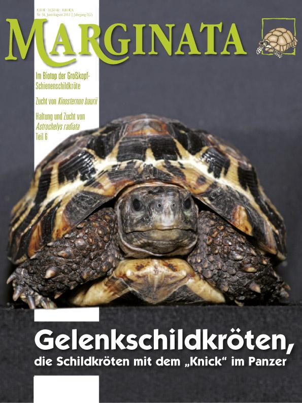 Marginata 34