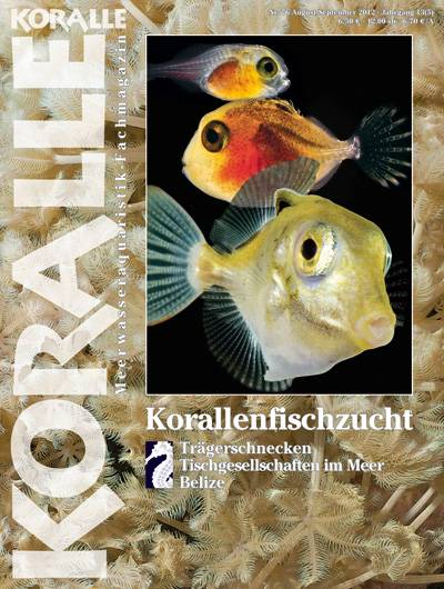 Koralle 76 – Korallenfischzucht Aug/Sep 2012