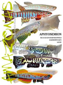 Amazonas 44 – Aphyosemion Nov/Dez 2012