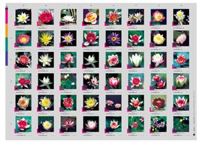 Aqualog Seerosen Waterlilies