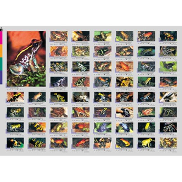 aqualog faltposter poison dart frogs