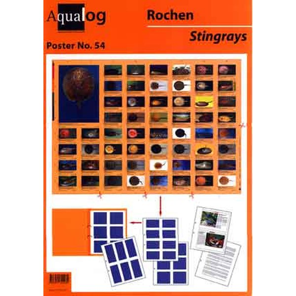 aqualog fold up poster stingrays
