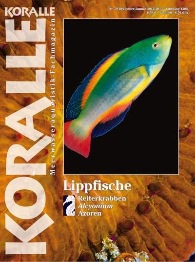 Koralle 78 – Lippfische Dez 2012/Jan 2013
