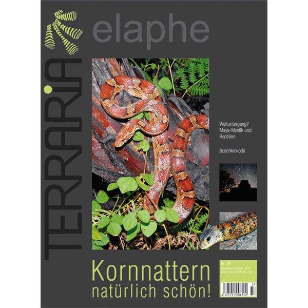 terraria 38 kornnattern natuerlich schoen november dezember 2012
