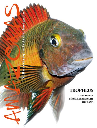 Amazonas 47 – Tropheus Mai/Juni 2013