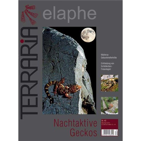 terraria 40 nachtaktive geckos