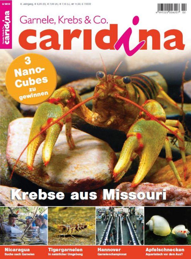 Caridina 2/2013