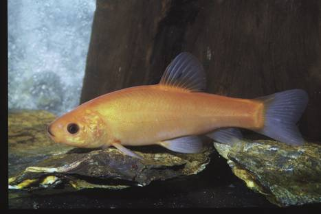 The Tench 4