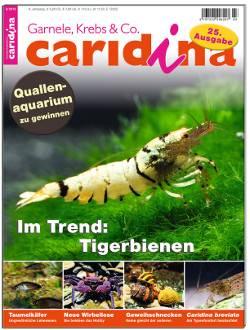 Caridina 3/2013