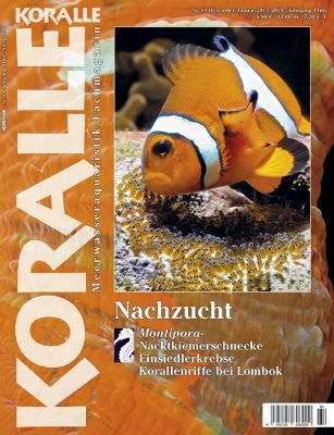 Koralle 84 – Nachzucht Dezember/Januar 2013/2014