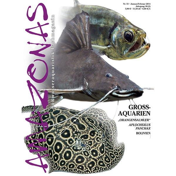 amazonas 51 gross aquarien januar februar 2014