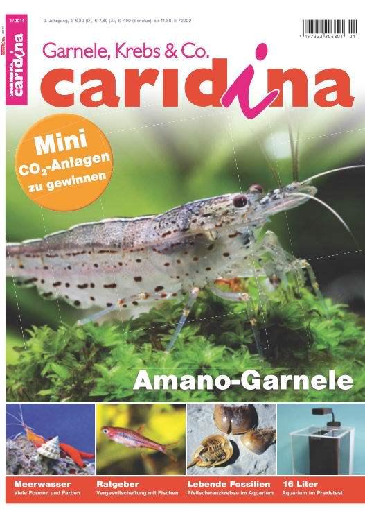Caridina 1/2014