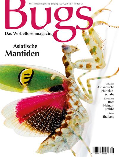 Bugs 6