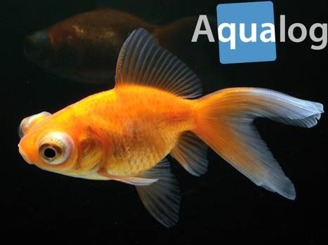 Goldfische datieren Website