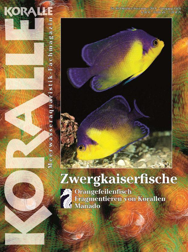 Koralle 89 – Zwergkaiserfische Oktober / November 2014