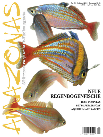Amazonas 53 – Neue Regenbogenfische Mai / Juni 2014