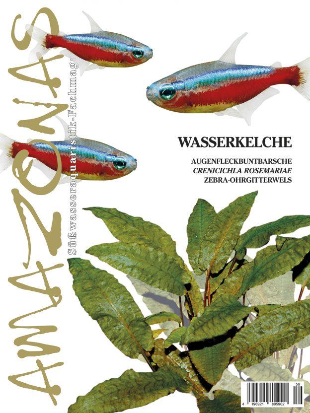 Amazonas 56 – Wasserkelche November/Dezember 2014