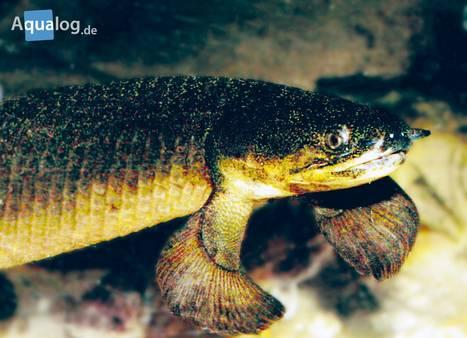 Geisterfisch-6