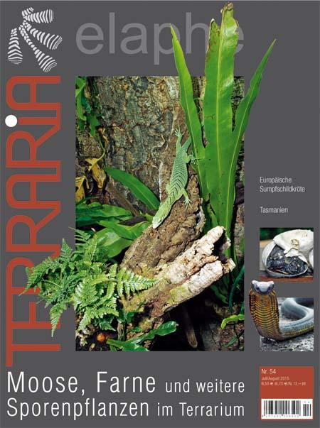 Terraria 54 – Moose, Farne und weitere Sporenpflanzen im Terrarium