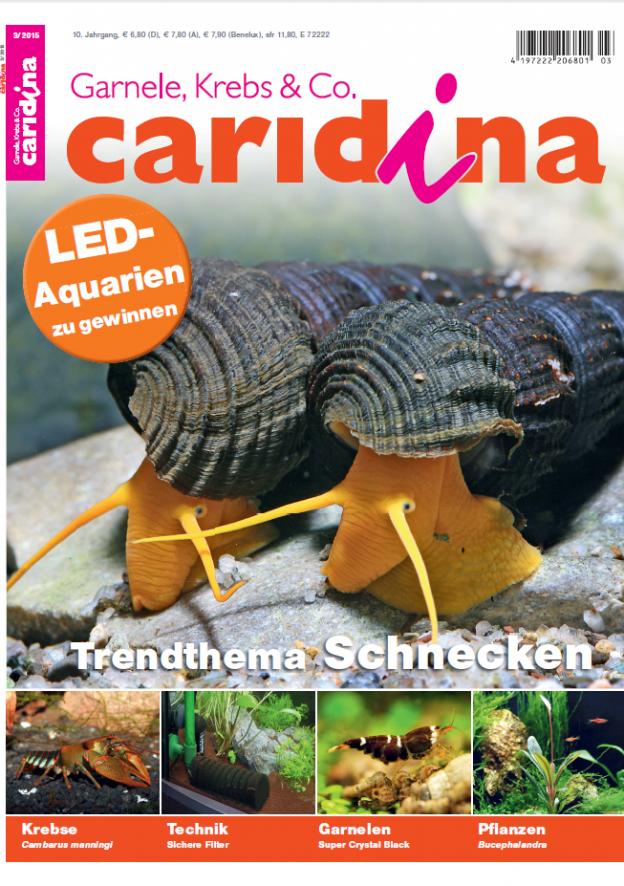 Caridina 3/2015