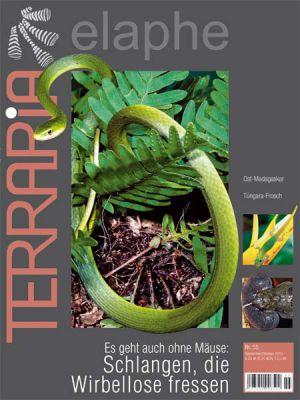 Terraria 55 – Schlangen, die Wirbellose fressen