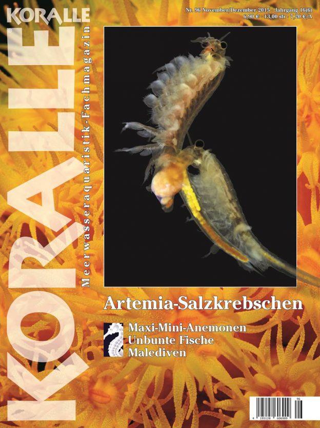 Koralle 96 – Artemia-Salzkrebschen November/Dezember 2015