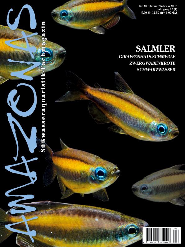 Amazonas 63 – Salmler
