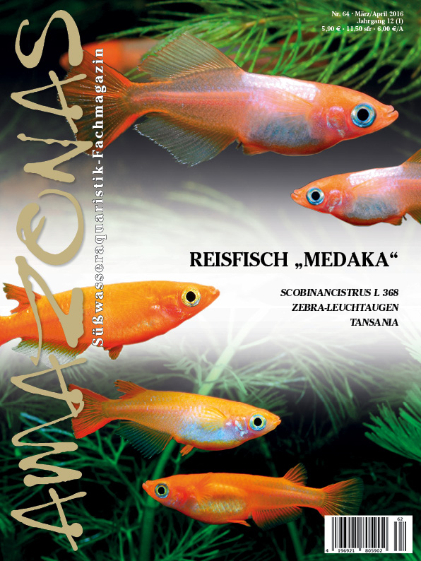 "Amazonas 64 – Reisfisch ""Medaka"""
