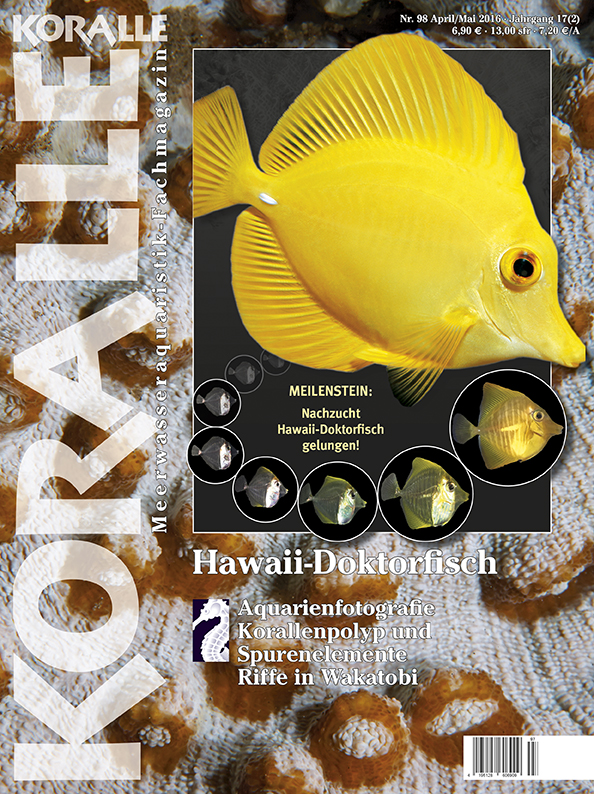 Koralle 98 Hawaii Doktorfisch April/Mai 2016