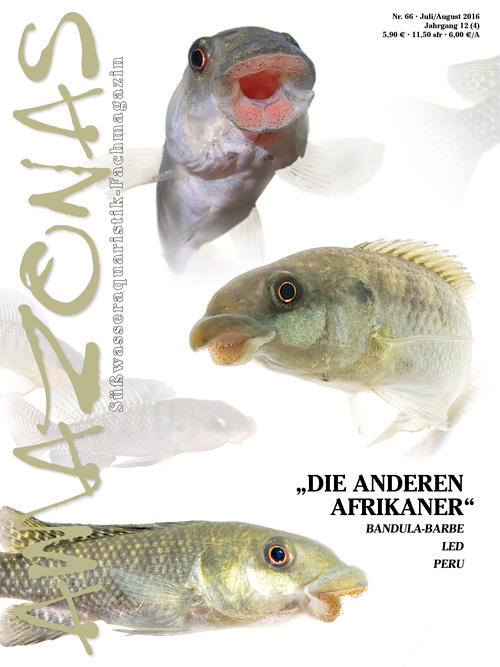 "Amazonas 66 - ""Die anderen Afrikaner"" (Juli/August 2016)"