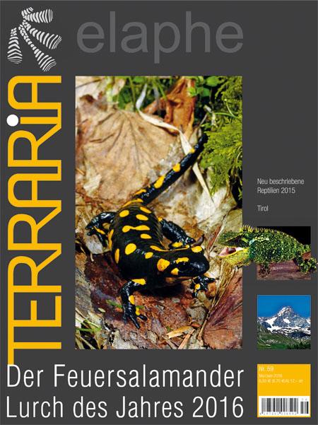 Terraria 59 - Der Feuersalamander Lurch des Jahres 2016