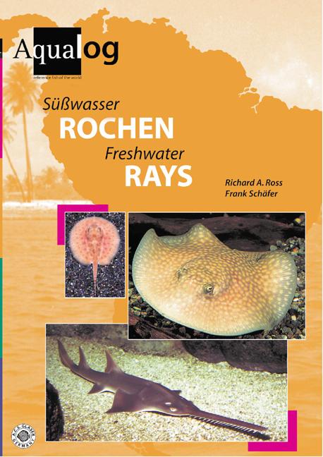 Süßwasserrochen/Freshwaterrays