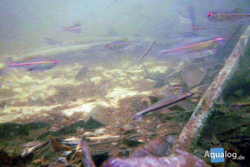 Unter Wasser sieht es im Lebensraum unserer Fische so aus.