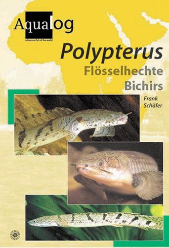 Polypterus - Bichirs