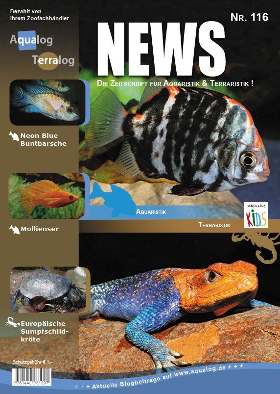 News 116D Web