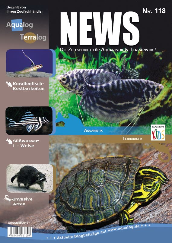 News 118D Web