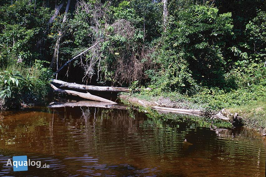 Auch Klarwasser hat oft eine braune Tönung, ist aber nicht so dunkel wie echtes Schwarzwasser.