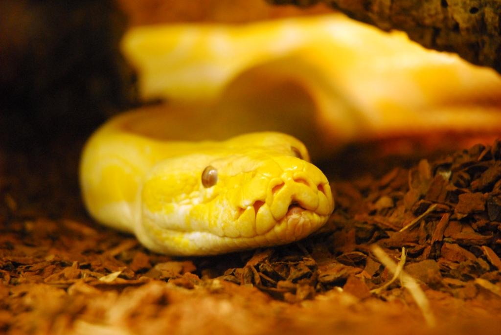 Ein exotische Biotop für Schlangenfans: Die Fisch & Reptil in der Messe Sindelfingen.