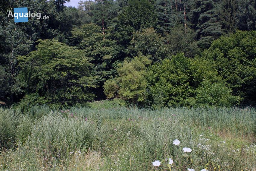 Das Grünland 60-0: es gibt viel zu tun.