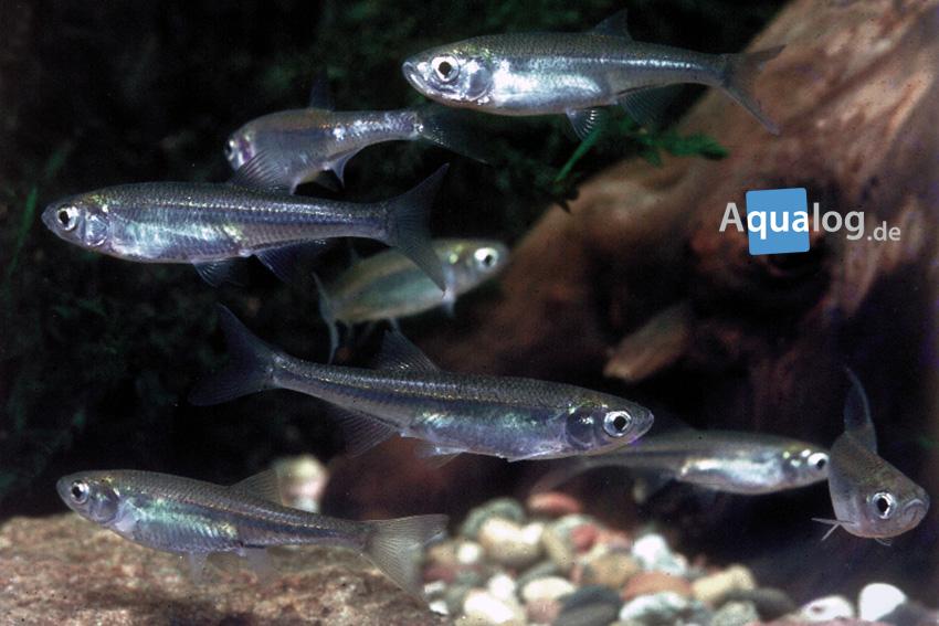 Gartenteich for Fischhaltung im teich
