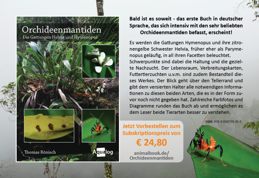 Orchideenmantiden-Buch