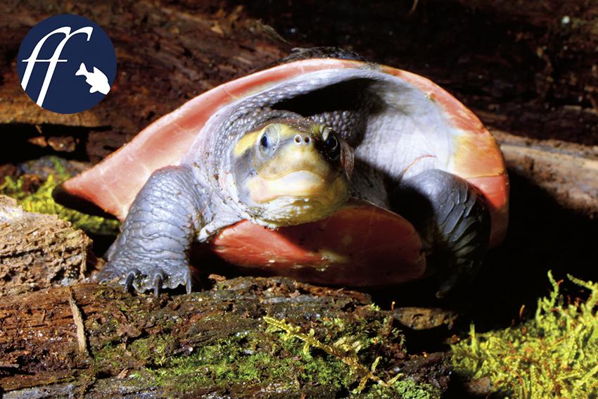 was essen wasserschildkröten