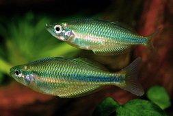 Fische & Aquarien Aqualog Regenbogenfische Und Verwandte Familien *neu*