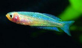 Aqualog Aquarien Haustierbedarf Regenbogenfische Und Verwandte Familien *neu*