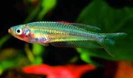 Aqualog Regenbogenfische Und Verwandte Familien *neu* Haustierbedarf Aquarien