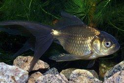 Goldfische und koi seite 2 von 10 for Koi und goldfische